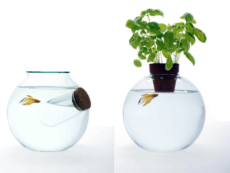 Fish Bowls Galore