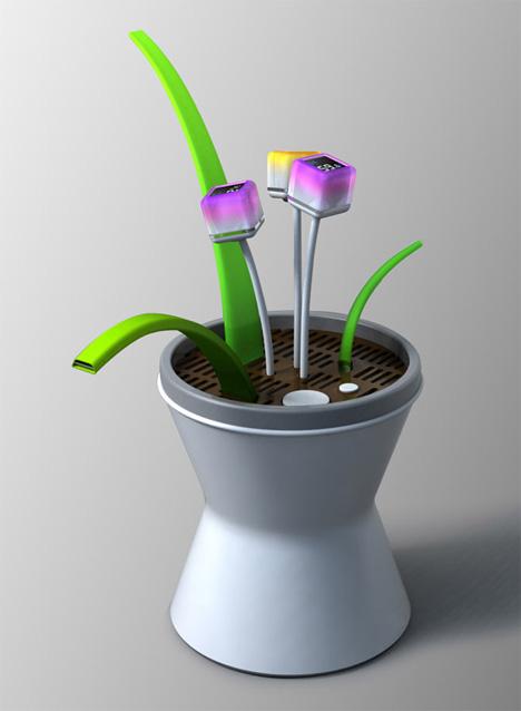 Practice Plant