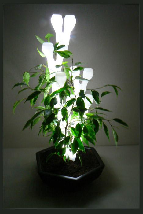 ivy-lamp-001