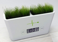 Grass Patch That Tells The Time