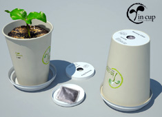 Coffee Cup Plant