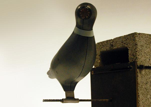 birdcamera02