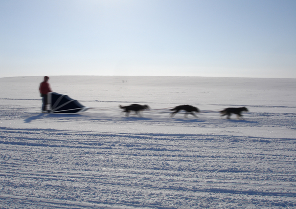 A Polar Journey sleddog sled by Dawid Dawod