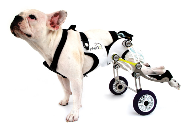 Amigo - Walking Aid for Dogs by Nir Shalom