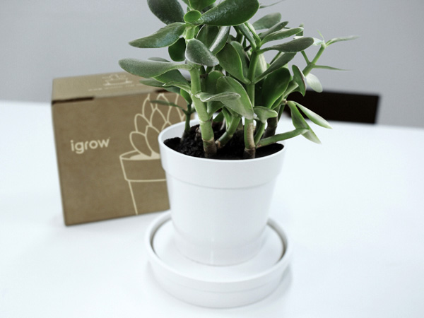 iGrow Flower Pot by Psychic Factory