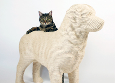 A Dog Your Cat Will Love