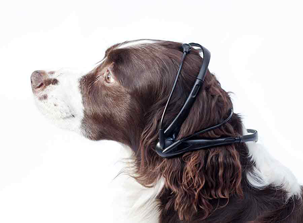 No More Woof - Animal Mind Reader by The Nordic Society for Discovery & Invention