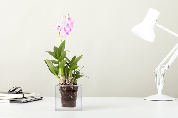 Boskke Cube Planter Giveaway Day 4!