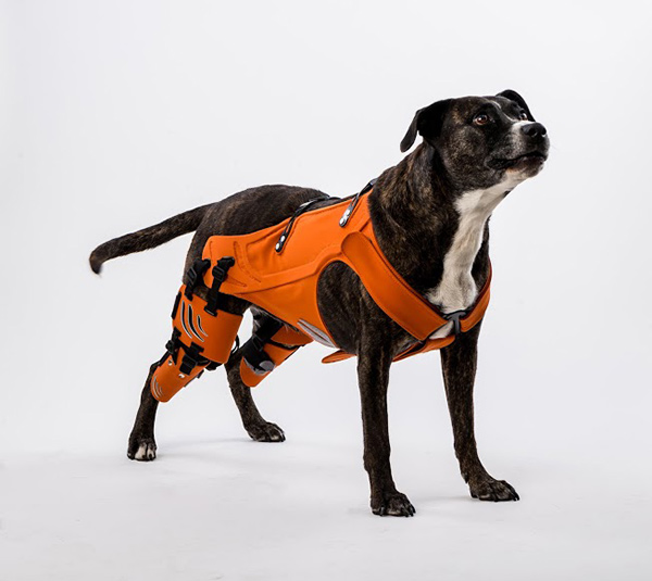 Hipster - Rehabilitation Harness for Dogs with Hip Dysplasia by Galia Weiss