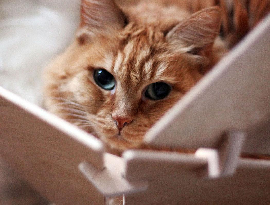 geobed_cat_bed_7