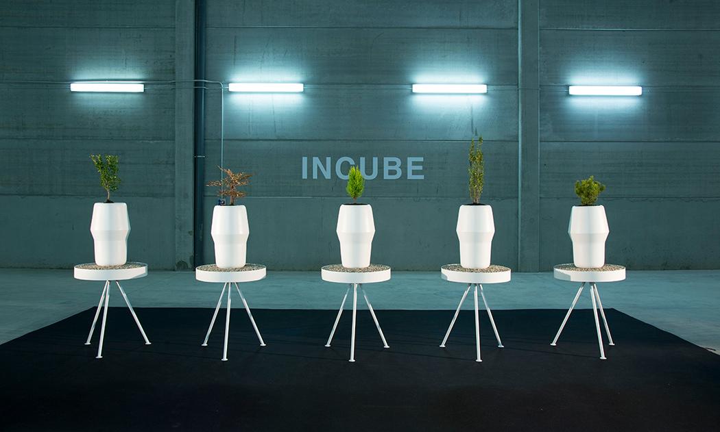 incube_02