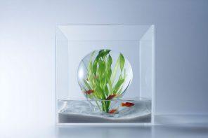 Aqua Architecture!