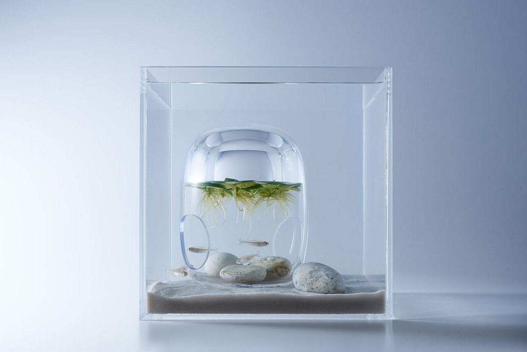 waterscapes_fishbowls_5