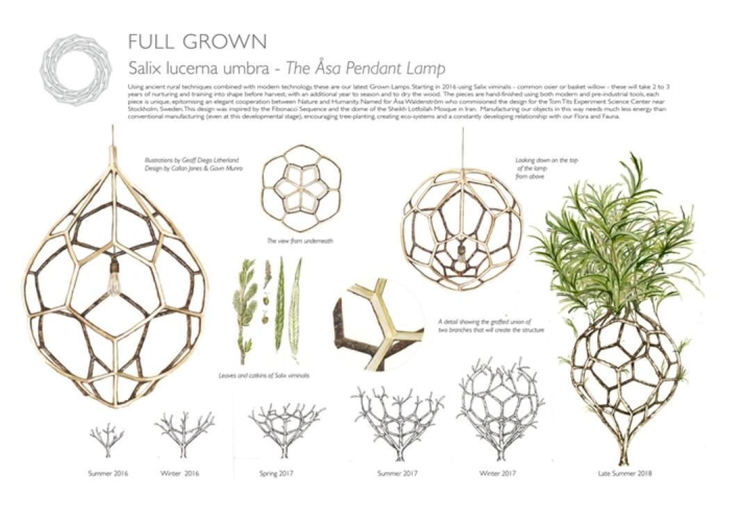 fullgrown_4