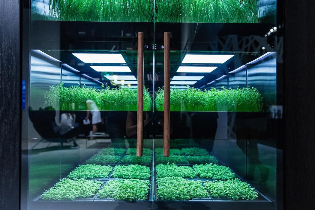 herb_garden_03