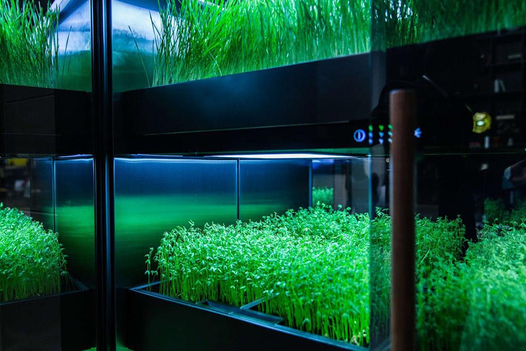 herb_garden_04