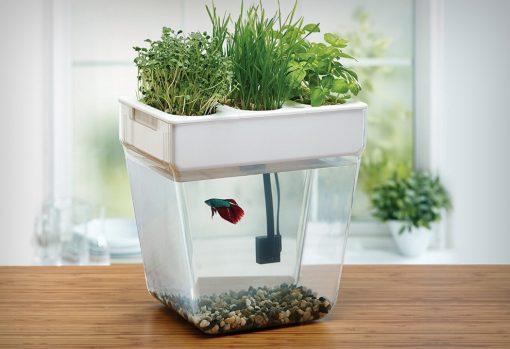 water_garden_fish_tank_1