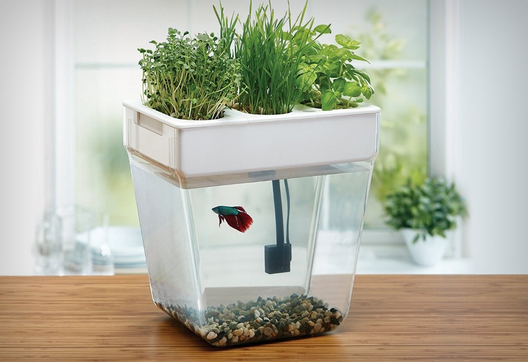 Fish feeds plant feeds fish | Yanko Design
