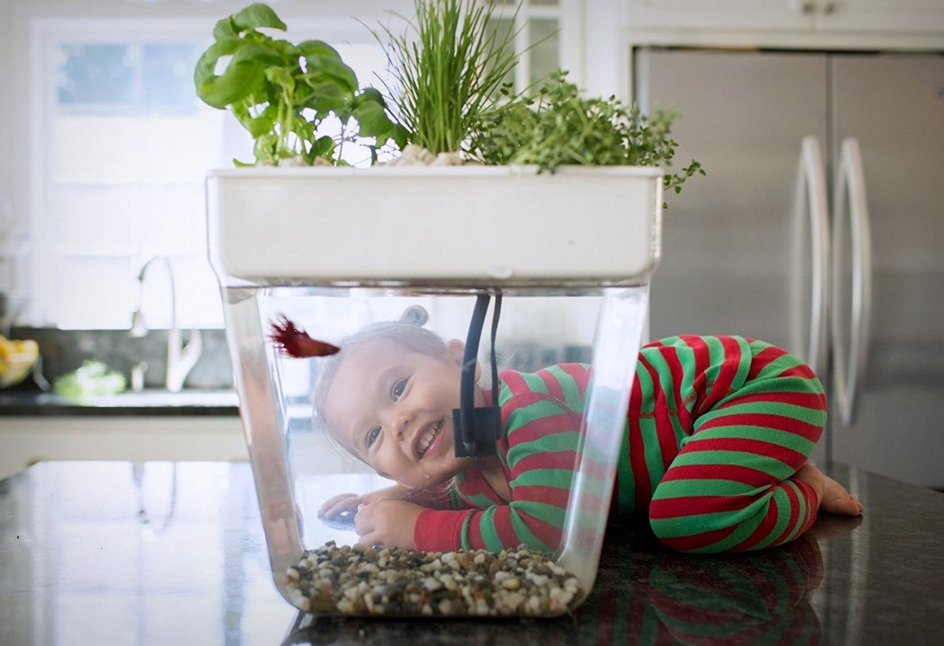 Fish feeds plant feeds fish yanko design for Water garden fish tank