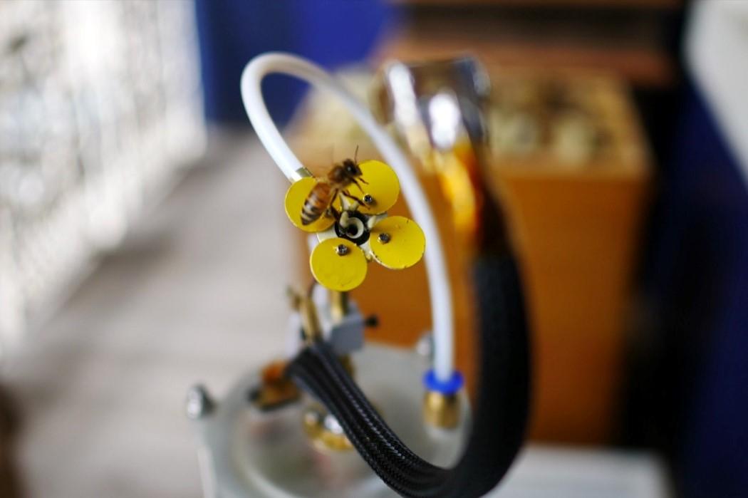 synthetic_pollinator_4