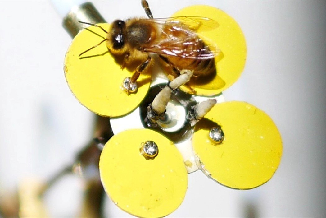 synthetic_pollinator_5