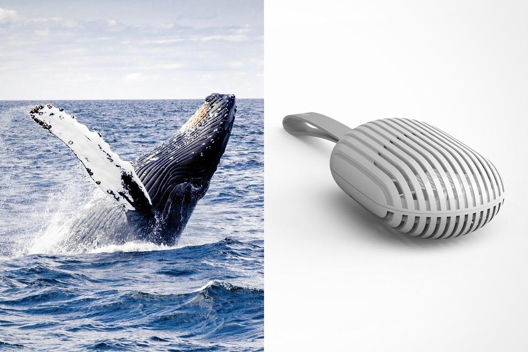 whale_fan_layout