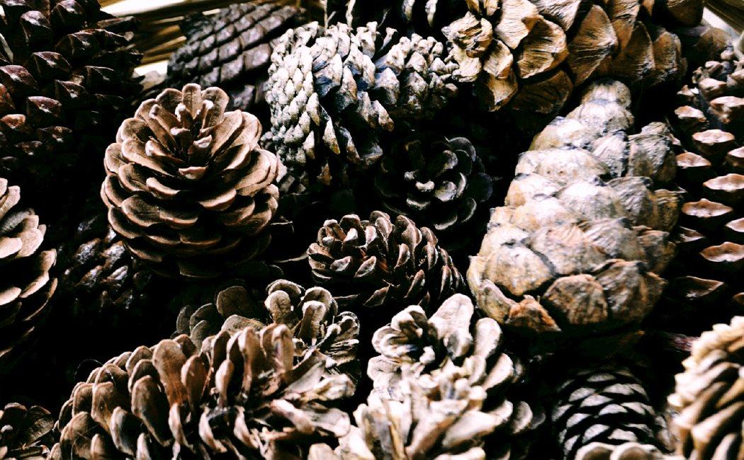 pineal_humidifier_01