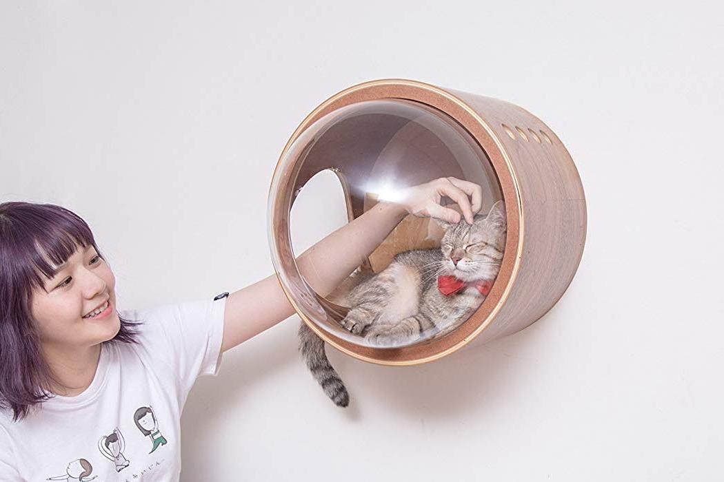 gamma_spaceship_cat_bed_layout