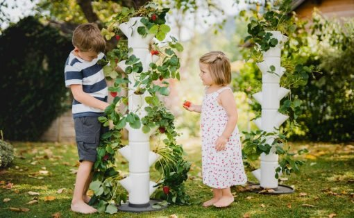 sissi_strawberry_tree_layout