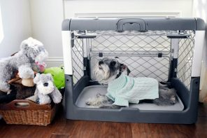 Safety comes first with this collapsible dog crate!