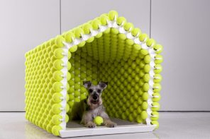 The best doghouse for your best-boy!