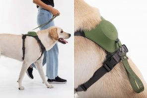 This dog harness + leash combo is the safest, most comfortable way for humans to walk their pets!