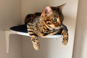 These adorable cat-shelves are made from upcycled furniture that cats broke!!