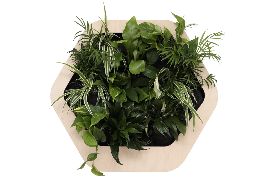 Эта шестиугольная система комнатных горшков поможет вам выбрать растения, которые будут процветать при естественном освещении вашего дома.