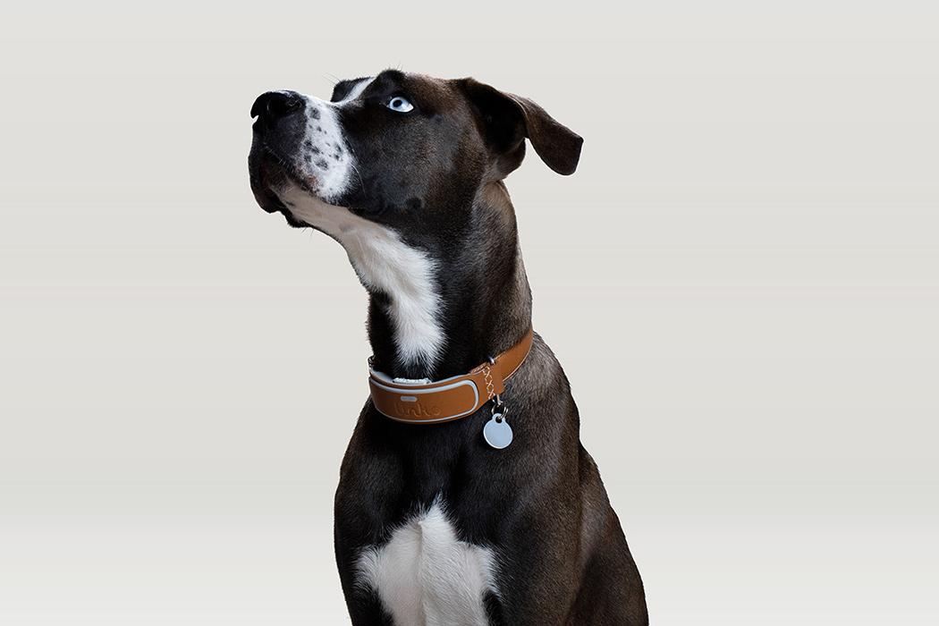 Этот ошейник для собак в стиле Fitbit поможет сохранить здоровье и безопасность вашего питомца!