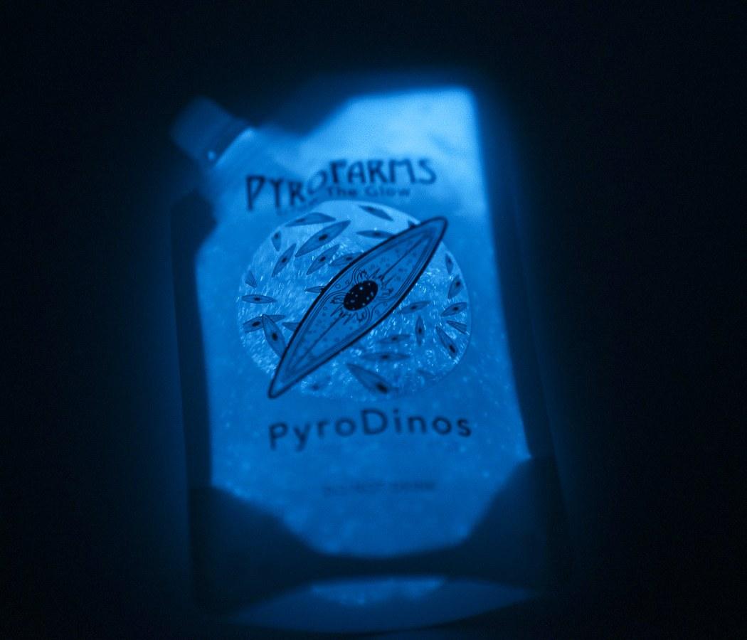 Этот светящийся шар наполнен теми же биолюминесцентными водорослями, которые встречаются на светящихся пляжах.