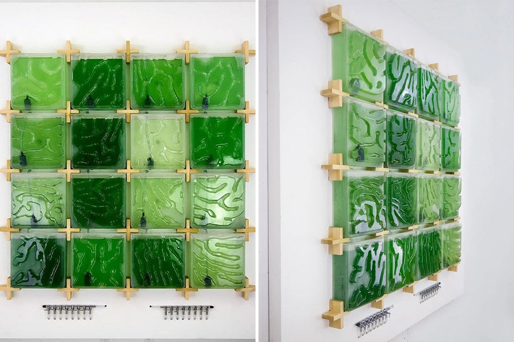 This indoor micro-algae farm mounts to any wall to grow the superfood right at home!