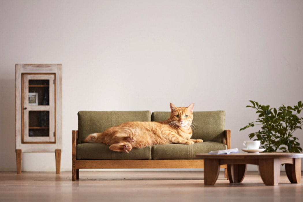 Cozy cat-friendly products to help your cat and you connect better!