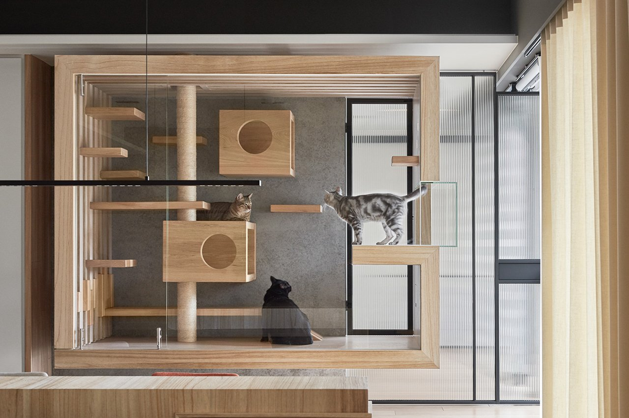 This modern apartment has a suspended glass cabin which is goals for cat lovers and their pets!