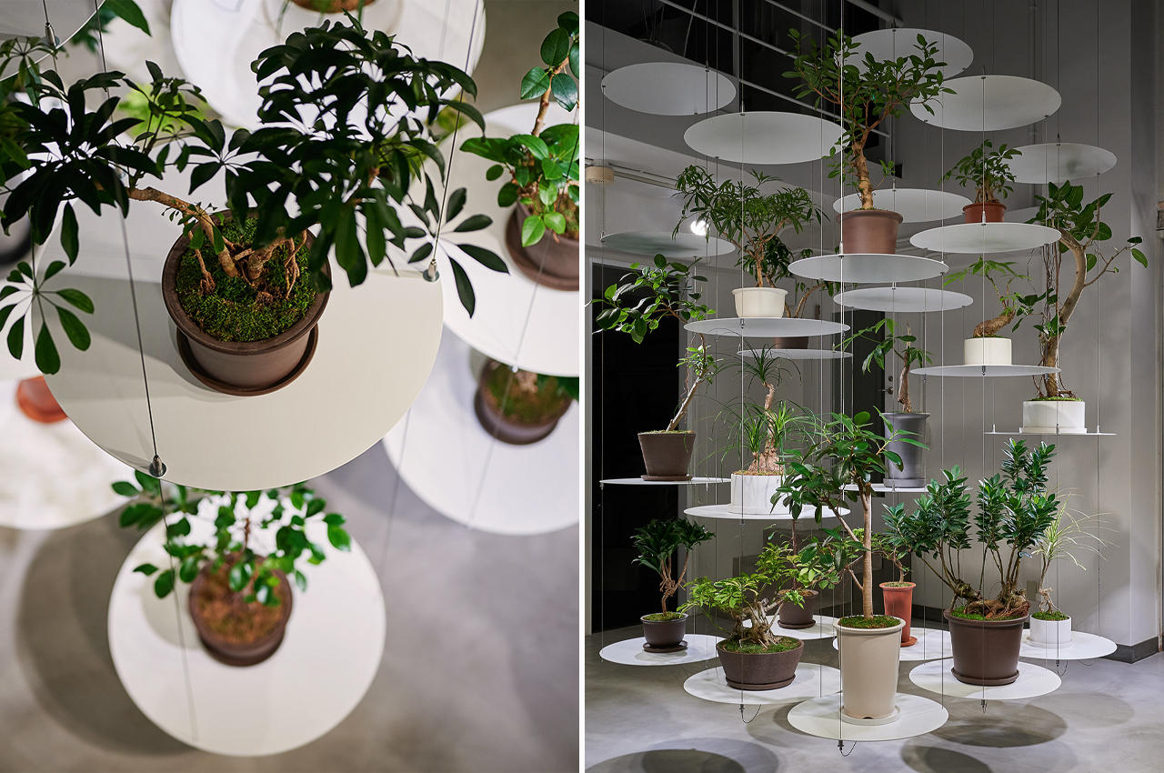 This hanging wire shelving is designed to showcase each plants individuality and unique purpose!