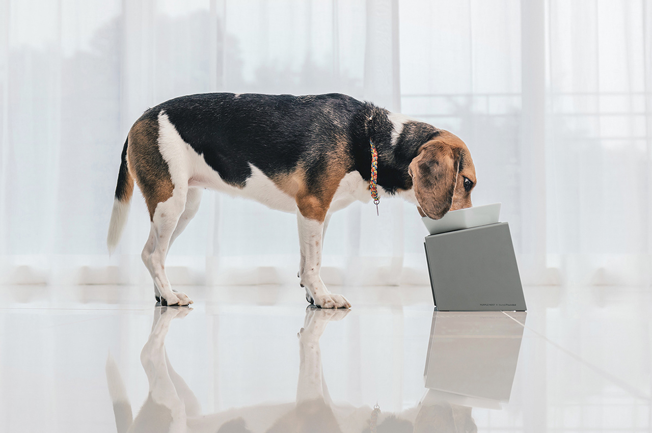 This adaptable food bowl for dogs was designed with a customizable stand to match your dog's height!