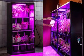 This self-sustainable cloud server is powered by the energy of growing tomatoes indoor!