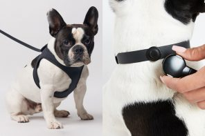 Dog-friendly products designed to help you give your pet the best life he truly deserves!